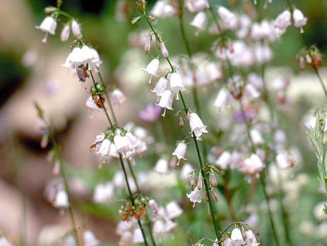 flower_09_03.jpg