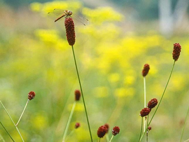 flower_10_01.jpg