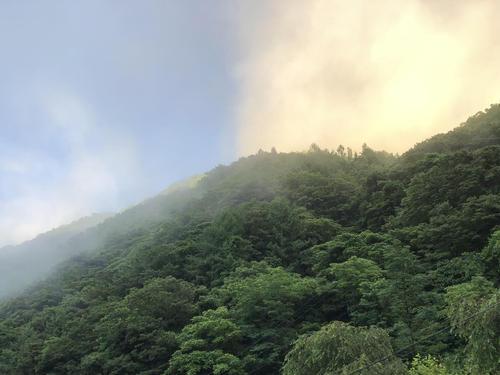crude_drug_201908_yakusyoku_2.JPG