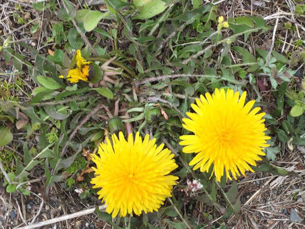 日野製薬 春の花
