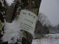 2018.3降雪2.jpg(降雪)