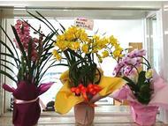 hino_blog_191226_flower.jpg(胡蝶蘭とシンビジューム)