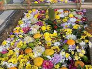 hino_blog_210210_flower.jpg(花手水)