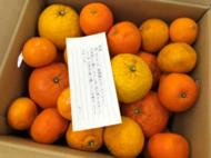 hino_blog_210409_oranges.png(柑橘類の贈り物)
