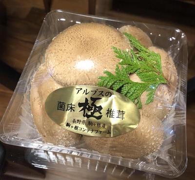 hino_blog_20191127_mushroom2.jpg