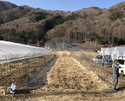 hino_blog_210311_senburi.jpg(センブリ畑の作業はじめ:草取り)
