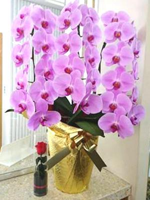 hino_blog_191226_flower2.jpg