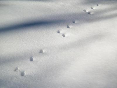 hino_blog_200210_yuki2.jpg(厳寒...冬を楽しむ)