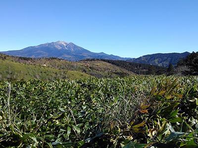 hino_blog_201116_yama1.JPG(白草山山頂から)