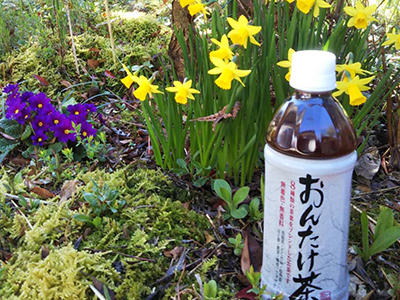 hino_blog_210408_pet_2.jpg(春を感じて散歩したいな)